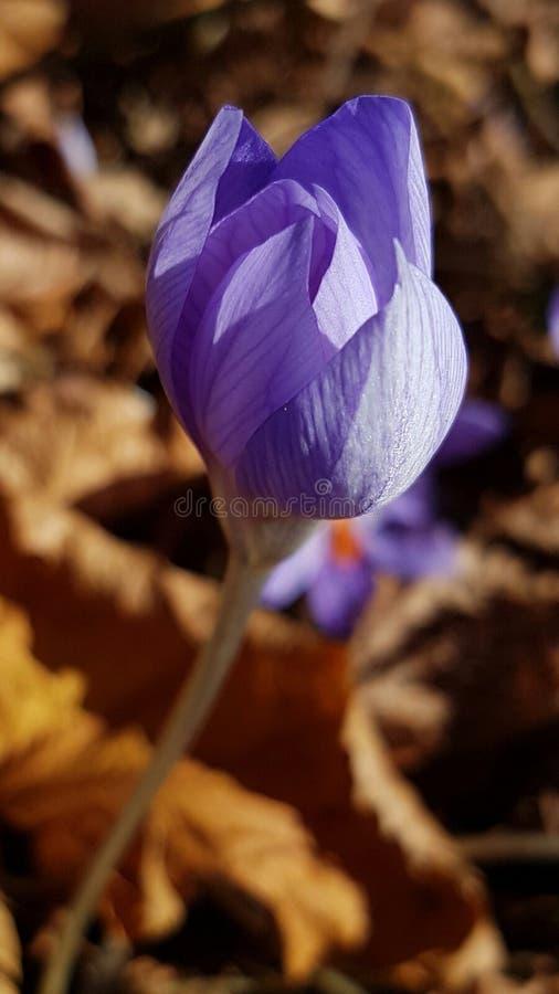 Sista blomma av hösten royaltyfria foton