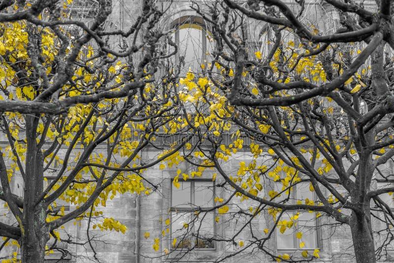 Sista guling suckar i svartvit plexus royaltyfria foton
