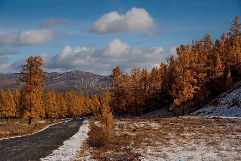 Sista höst i de Altai bergen royaltyfri bild