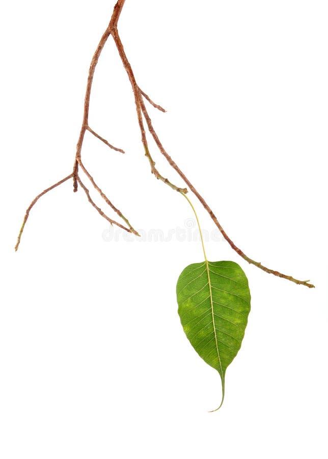 sista leaf royaltyfria bilder