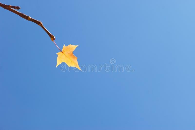 sista leaf för höst royaltyfri foto