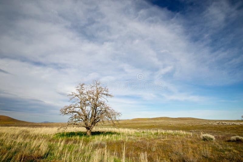 Sista träd på slättarna royaltyfria bilder