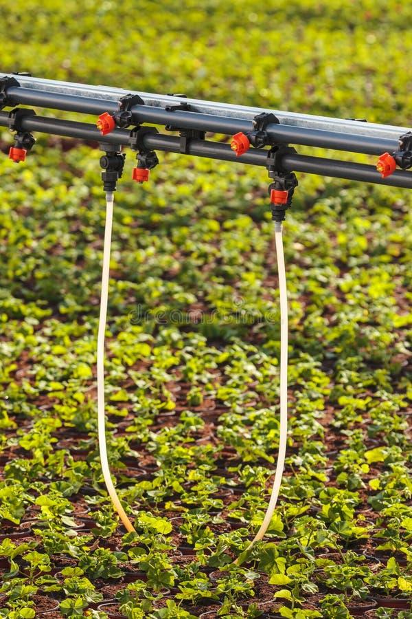 Sistema antincendio dentro le piante d'irrigazione di una serra immagine stock libera da diritti