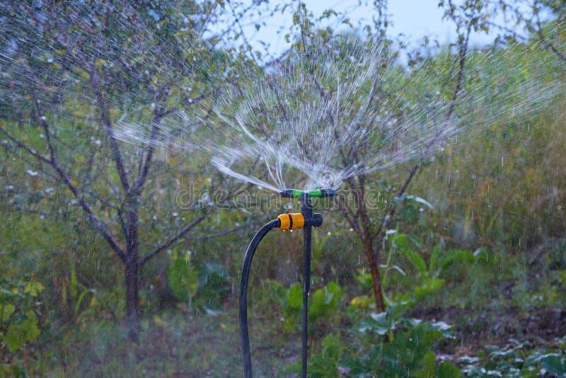 Sistema automatico di irrigazione a pioggia che innaffia il frutteto immagine stock