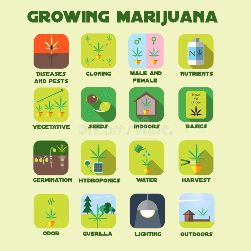 Sistema cada vez mayor del icono de la marijuana stock de ilustración