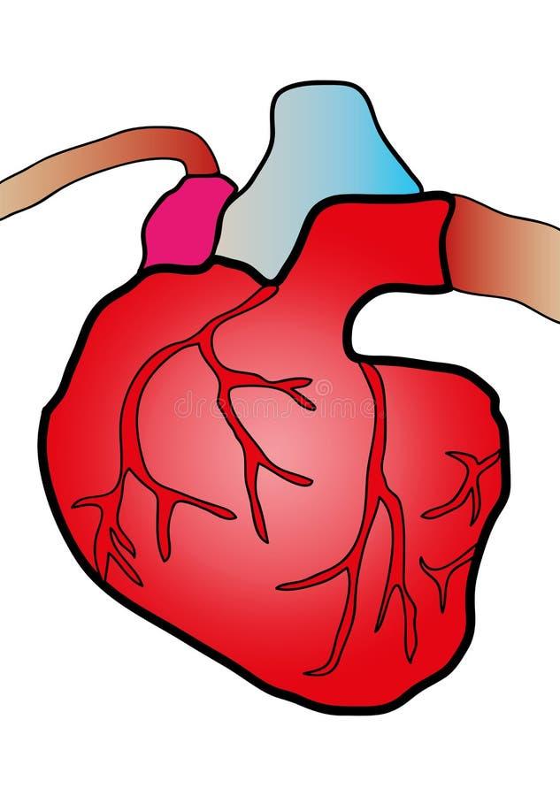 Sistema cardiaco stock de ilustración. Ilustración de ventrículo ...