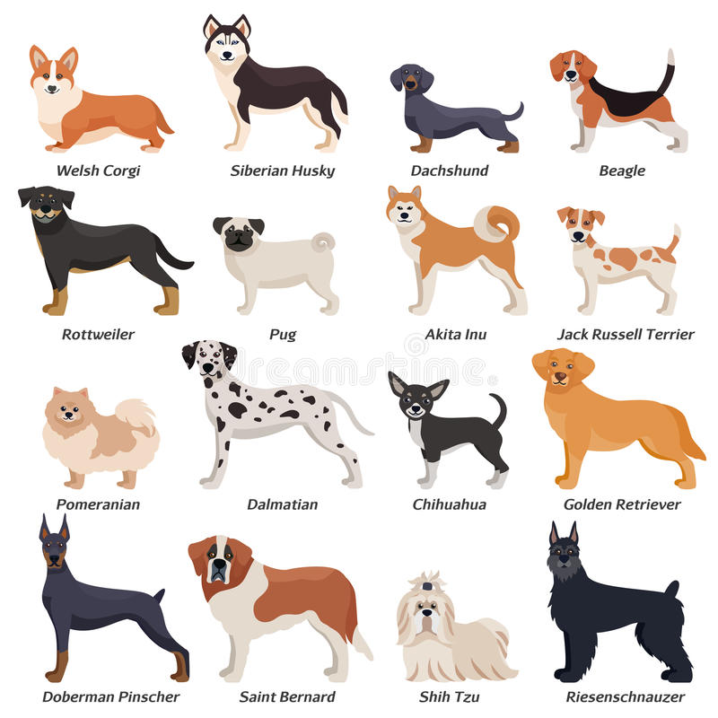 Sistema coloreado del icono de los perros del purasangre ilustración del vector