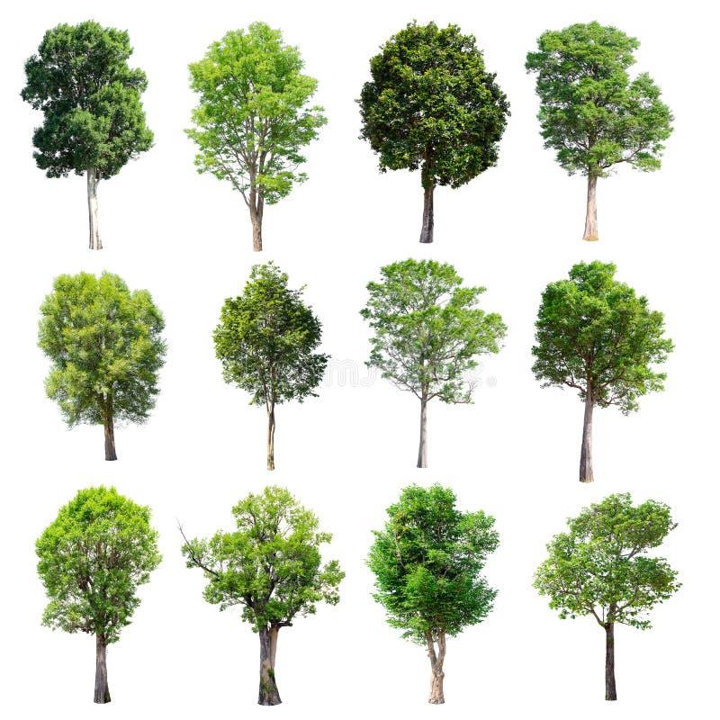 Sistema de árboles aislados en el fondo blanco fotografía de archivo