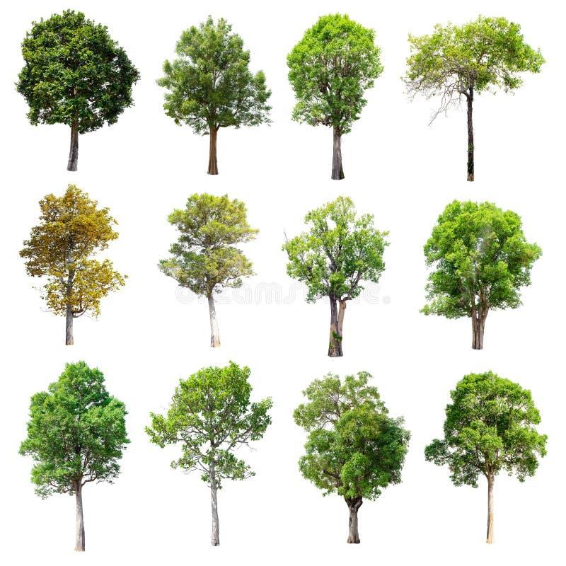 Sistema de árboles aislados en el fondo blanco imagenes de archivo