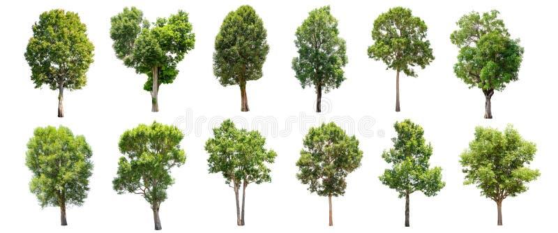 Sistema de árboles aislados en el fondo blanco imagen de archivo