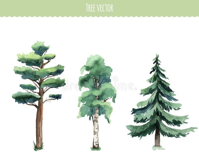 Sistema de árboles de la acuarela Abedul, pino, abeto ilustración del vector