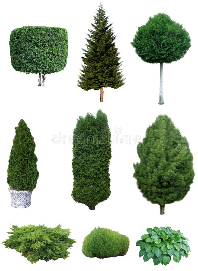Sistema de árboles y de arbustos fotografía de archivo libre de regalías