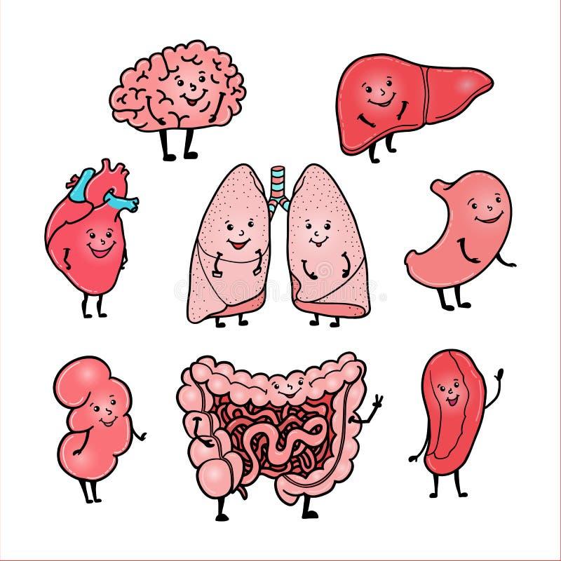Sistema De órganos Humanos Divertidos Con Las Caras Sonrientes ...