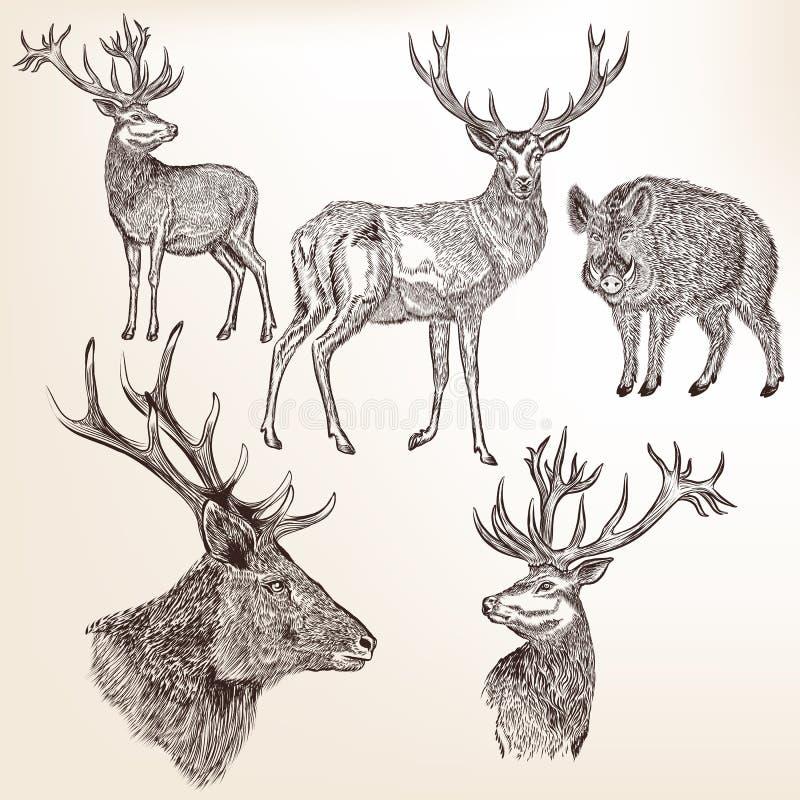Download Sistema De Animales Dibujados Mano Detallada Ilustración del Vector - Ilustración de silueta, sticker: 64207822