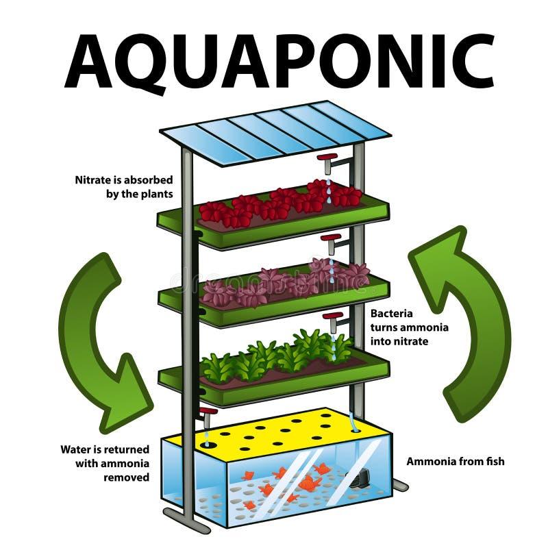 Sistema de Aquaponic ilustração do vetor