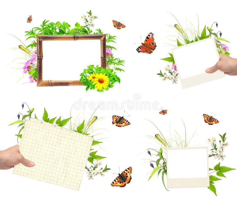 Sistema de bastidores del verano con la foto, las hojas verdes, las flores y el insec libre illustration