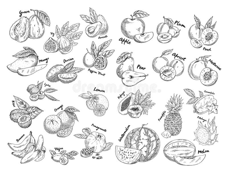 Sistema de bosquejos aislados de la fruta exótica, tropical ilustración del vector