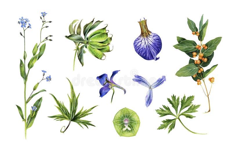 Sistema de bosquejos botánicos Delfinio, iris, globeflower, nomeolvides, helleborus y otro ilustración del vector