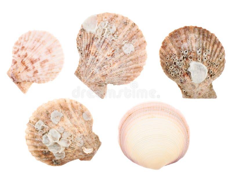 Sistema de cáscaras múltiples del mar aisladas fotografía de archivo libre de regalías