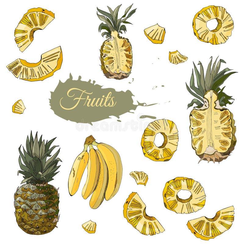 Sistema de color de frutas de la pi?a y del pl?tano Elementos enteros y cortados aislados en el fondo blanco Bosquejo drenado man libre illustration