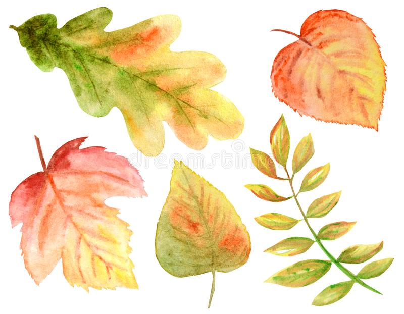 Sistema de colores brillante de hojas de otoño de la acuarela Uvas salvajes, olmo, tilo, roble, serbal, pera aislada en el fondo  stock de ilustración
