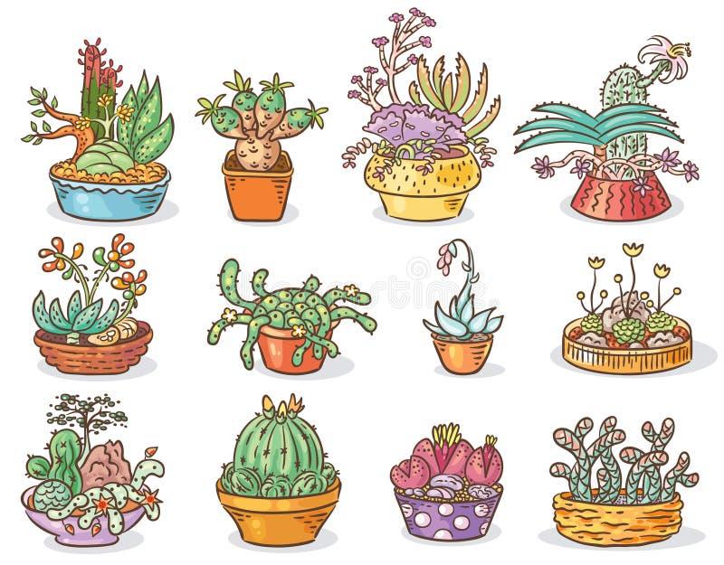 Sistema de composiciones suculentas en envases, dibujo colorido, aislado ilustración del vector