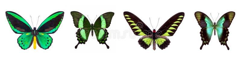 Sistema de cuatro mariposas hermosas verdes foto de archivo libre de regalías