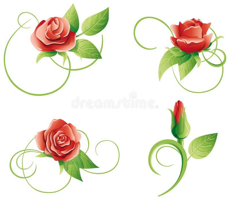 Sistema de cuatro rosas en un fondo blanco stock de ilustración
