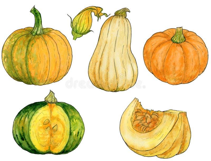 Sistema de dibujo de calabazas anaranjadas, verdes, amarillas imágenes de archivo libres de regalías