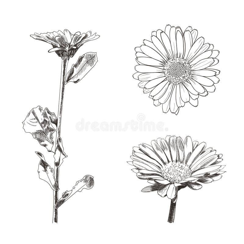 Sistema de dibujos de las flores, bosquejos botánicos del vector del estilo aislados stock de ilustración
