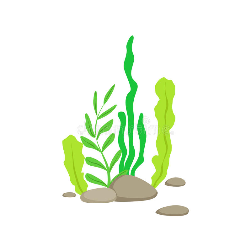Sistema de diversas algas subacuáticas inferiores que crecen en la roca stock de ilustración