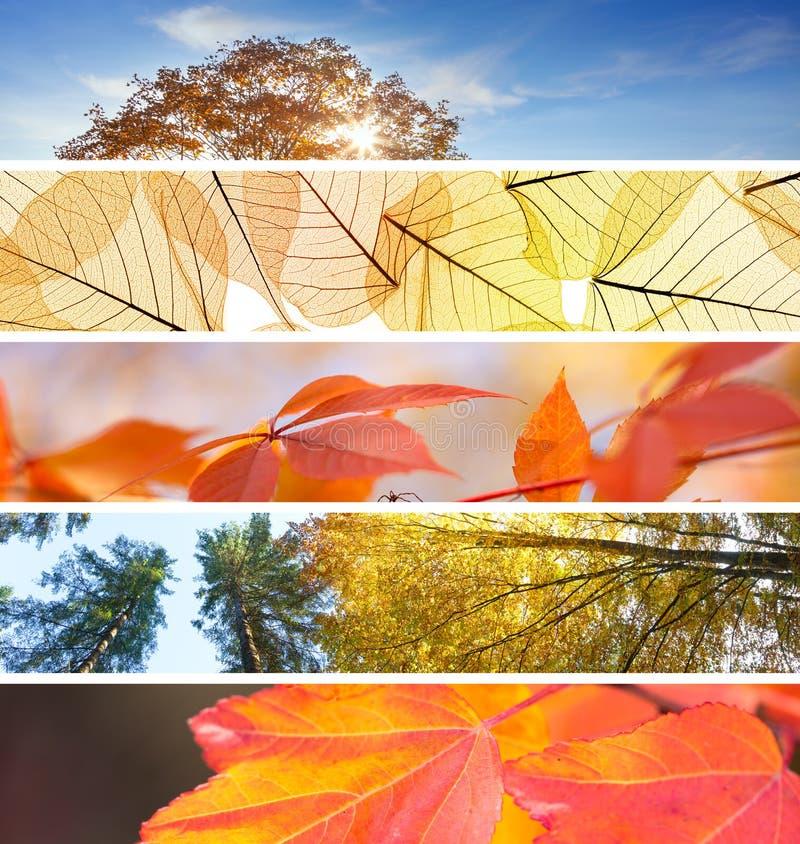 Sistema de diversas banderas de la caída - backgr colorido del extracto del otoño imagen de archivo libre de regalías