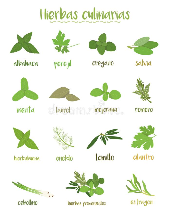 Sistema de 15 diversas hierbas culinarias en estilo de la historieta Nombres españoles ilustración del vector