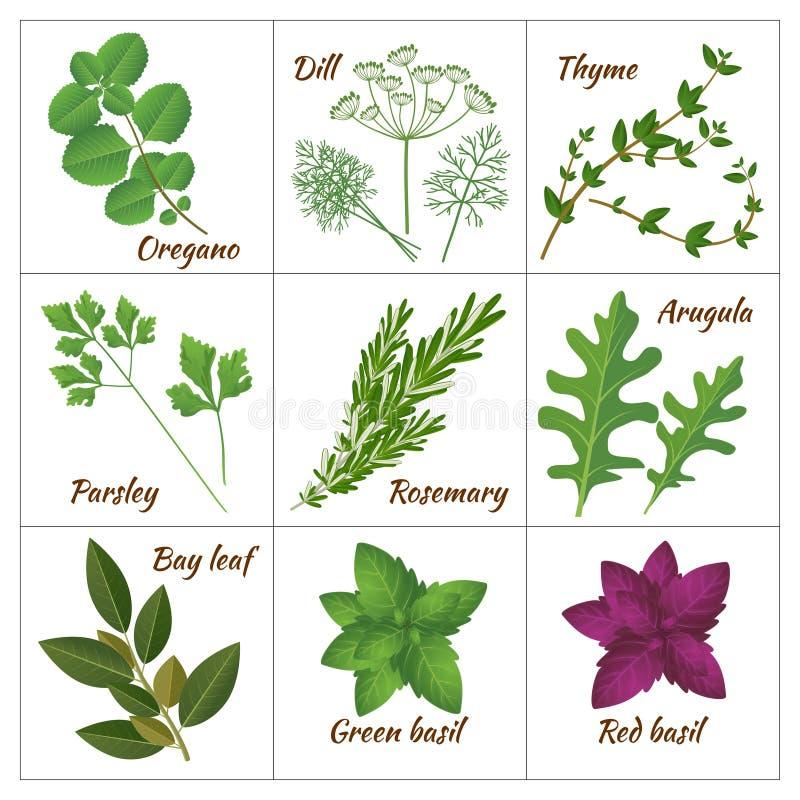 Sistema de diversas hierbas culinarias o de hierbas y de especias aromáticas medicinales, curativas stock de ilustración