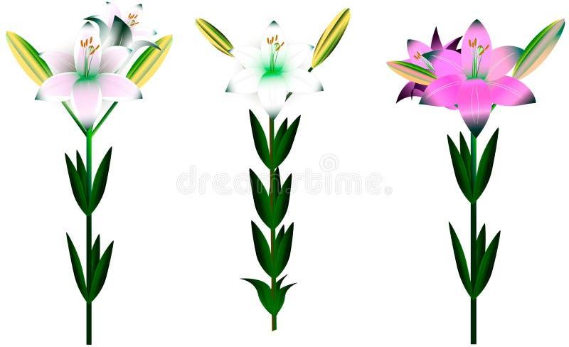 Sistema de diversos lirios con las hojas y los brotes ilustración del vector