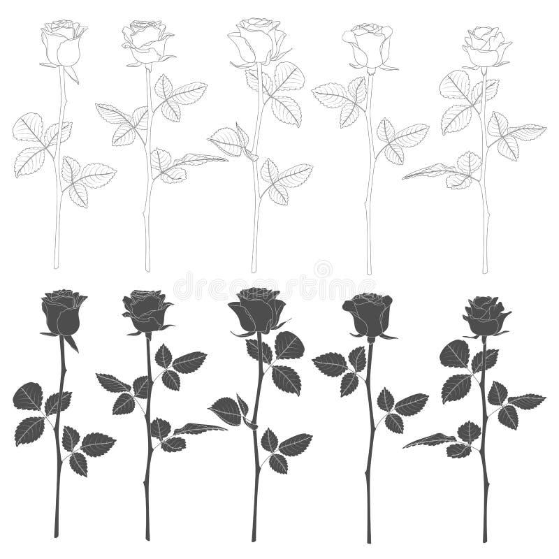 Sistema de ejemplos blancos y negros con las rosas Objetos aislados del vector libre illustration