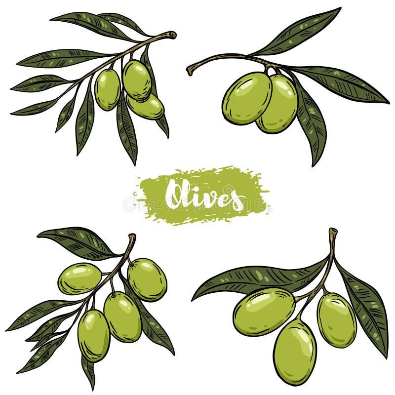 Sistema de ejemplos de la rama de olivo Diseñe los elementos para el cartel, etiqueta, emblema, muestra, bandera Ilustración del  libre illustration