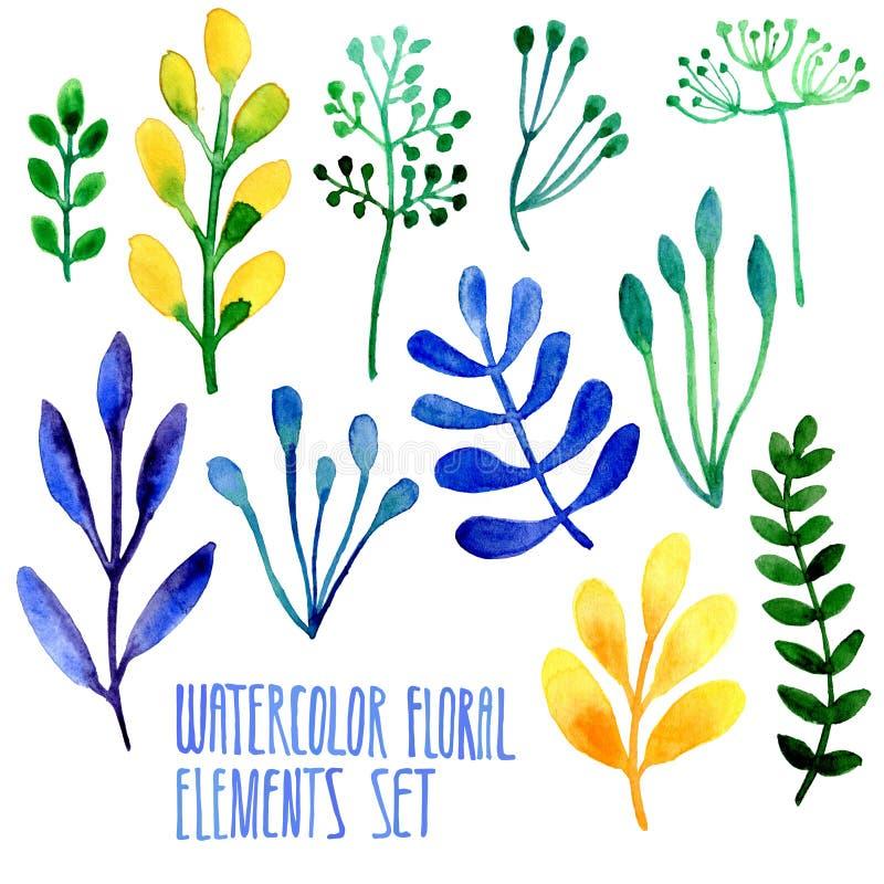 Sistema de elementos florales dibujados mano de la acuarela stock de ilustración