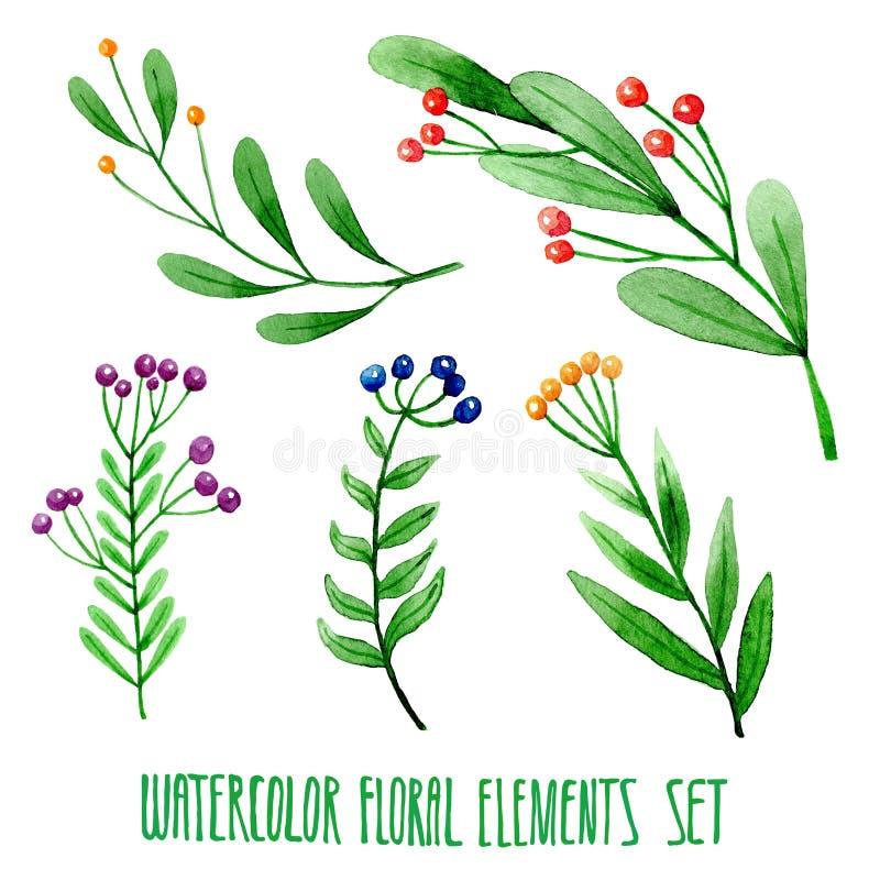 Sistema de elementos florales dibujados mano de la acuarela ilustración del vector