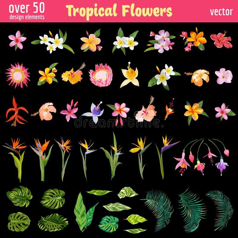 Sistema de elementos tropical del diseño de las flores libre illustration
