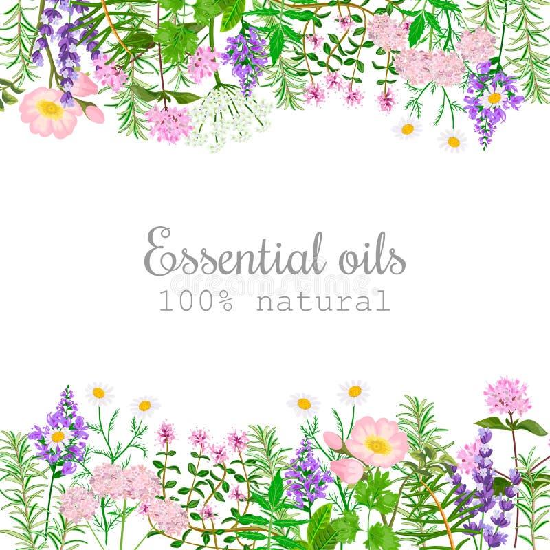 Sistema de etiqueta popular de las plantas de aceite esencial stock de ilustración