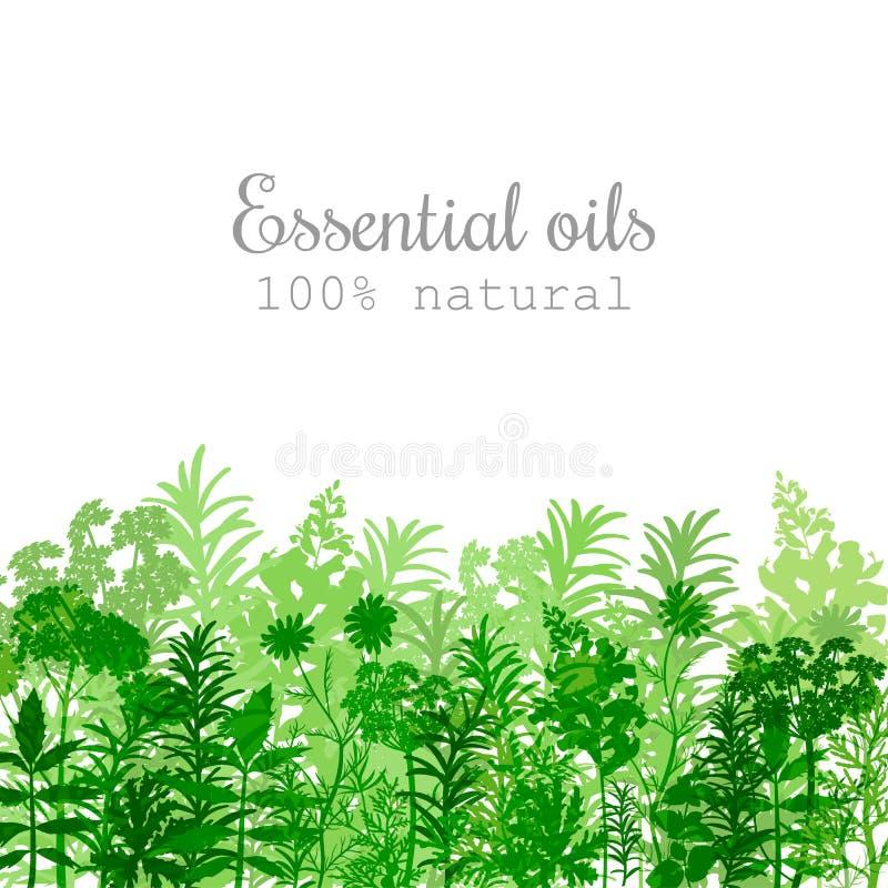 Sistema de etiqueta popular de las plantas de aceite esencial en color verde libre illustration