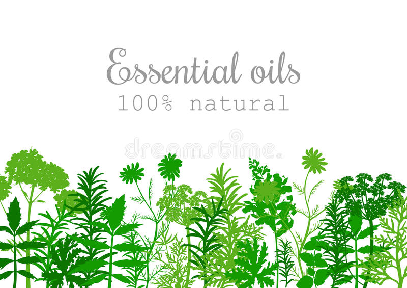 Sistema de etiqueta popular de las plantas de aceite esencial en verde ilustración del vector