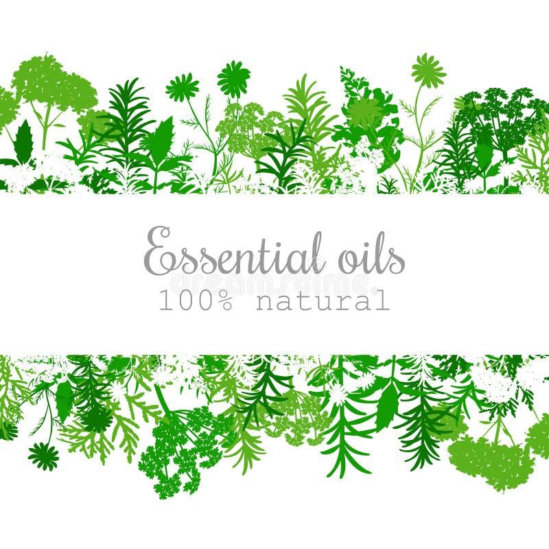 Sistema de etiqueta popular de las plantas de aceite esencial en verde stock de ilustración