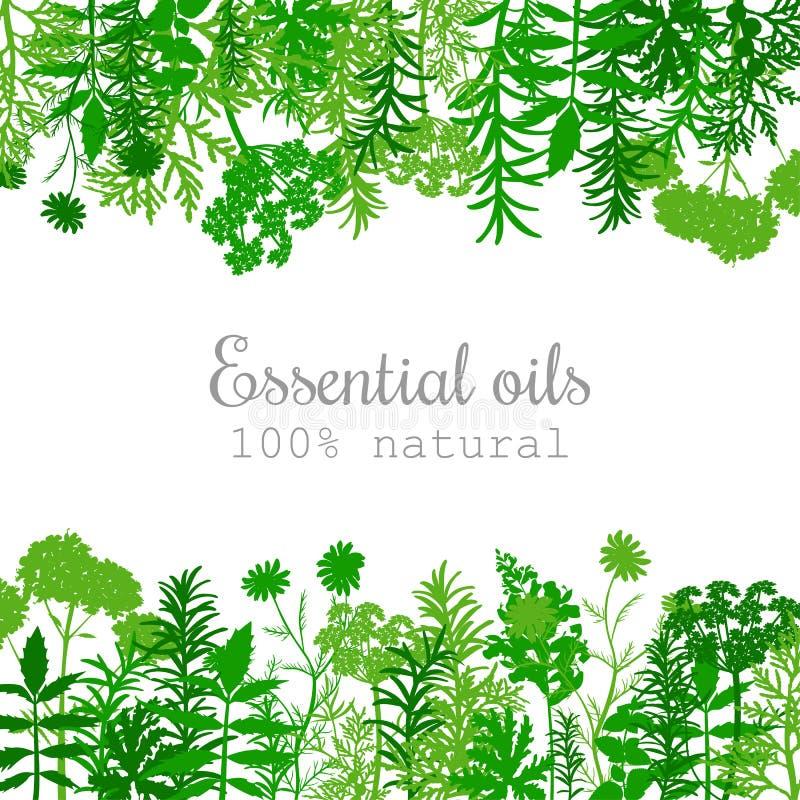 Sistema de etiqueta popular de las plantas de aceite esencial en verde plano ilustración del vector
