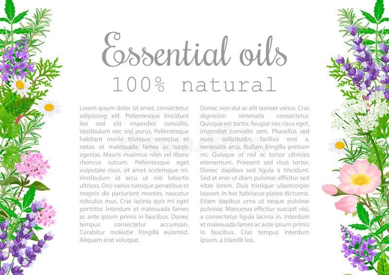 Sistema de etiqueta popular de las plantas de aceite esencial Insignia con el texto stock de ilustración