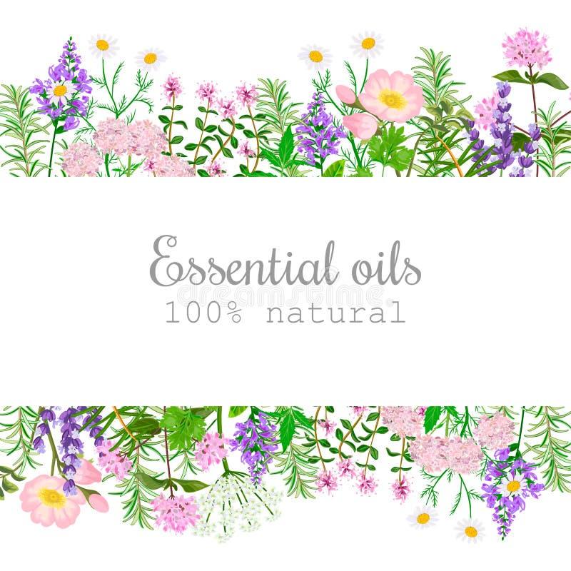 Sistema de etiqueta popular de las plantas de aceite esencial Insignia con el texto Hierbabuena, lavanda, sabio, toronjil, Rose,  ilustración del vector