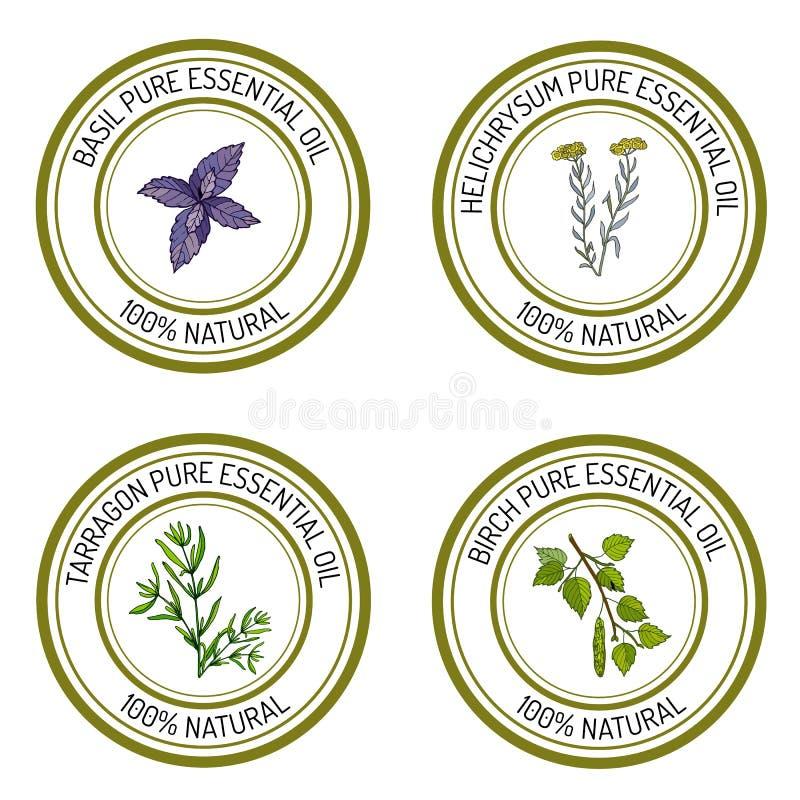 Sistema de etiquetas del aceite esencial: albahaca; estragón; abedul; helichrysum stock de ilustración