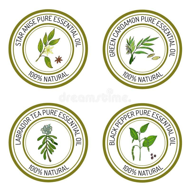 Sistema de etiquetas del aceite esencial: anís de estrella, cardamon verde, labrado ilustración del vector