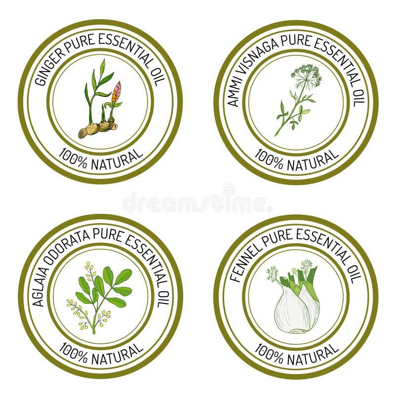 Sistema de etiquetas del aceite esencial: jengibre, visnaga del ammi, odorat del aglaia ilustración del vector